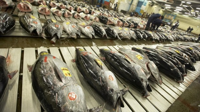 chợ cá Tsukiji.