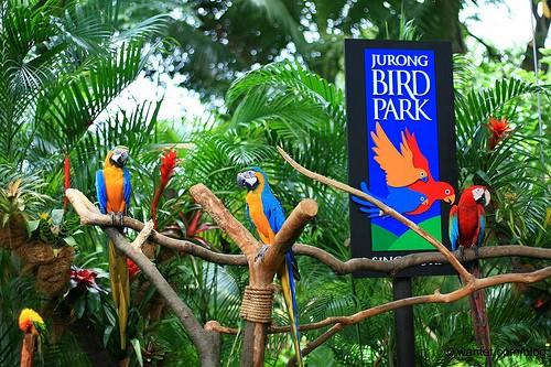 Vườn chim Juong
