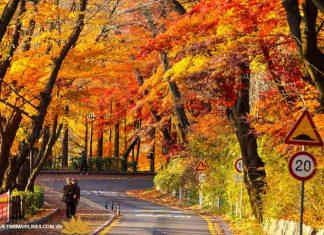 Đường lên núi Namsan